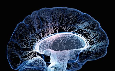 MSc Neuroscience