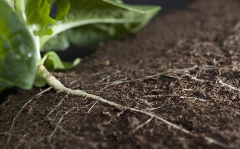 plant roots in soil