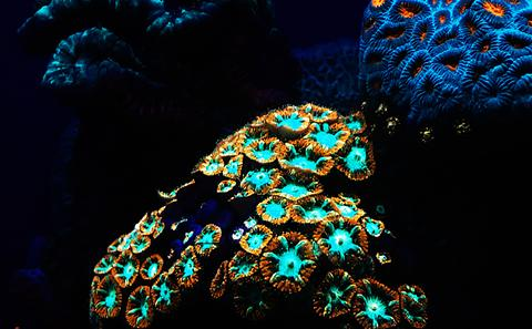 Images of coral reef