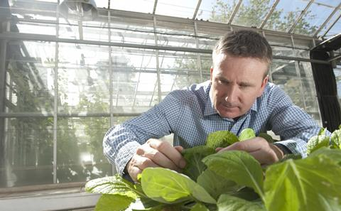 Picture of man studying plant leaves