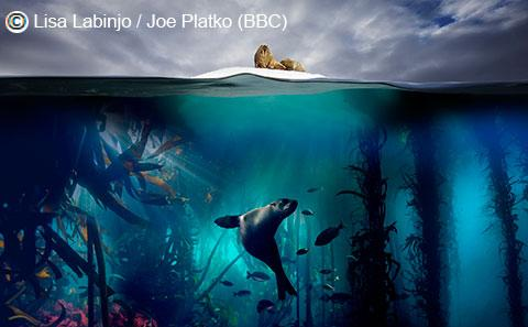 BBC Blue Planet II icon of seal under iceberg