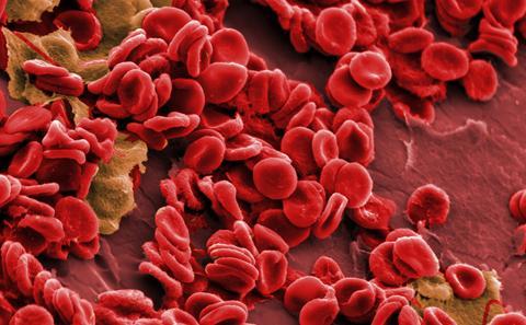 SEM image of blood cells