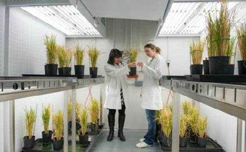 Plant Growth Facility