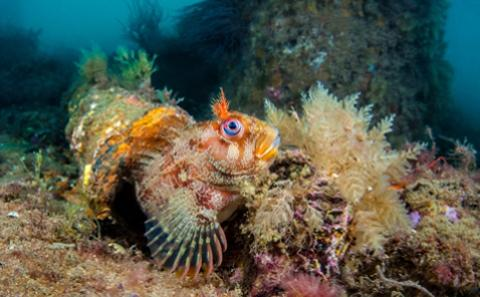 Marine Biology and Ecology (MBE)