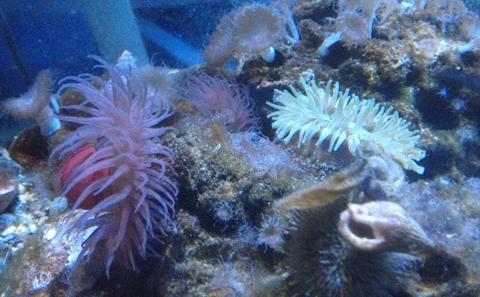 Research aquarium