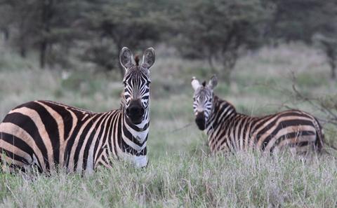 MRes Wildlife Conservation