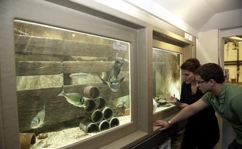 Looking at fish in aquarium