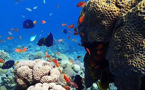Fish swimming in a vibrant coral reef. Research is being conducted to change the worlds actions towards coral reefs