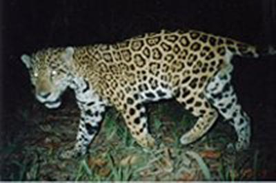 New project to protect Belize's 'wildlife corridor'