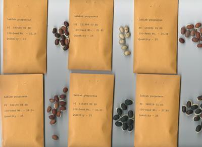 Variation in seeds
