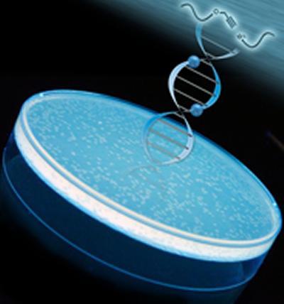 Colonies of E.coli were used to research biocompatibility