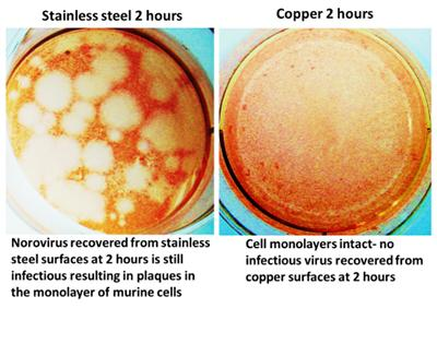 Effects of copper surfaces on norovirus