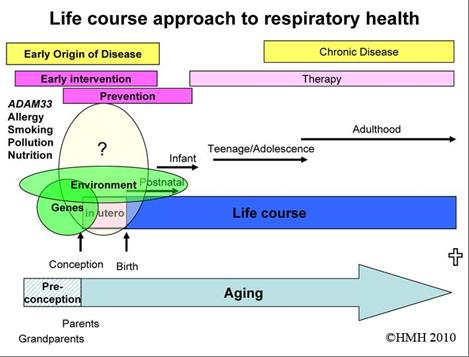 Gene Environment Interactions in Developing Lungs and their Involvement in the Early Origin of Asthma.