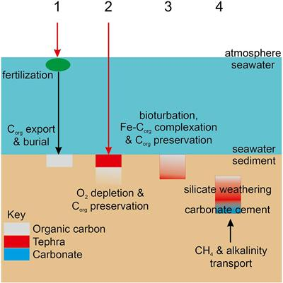 Tephra role preserving organic carbon