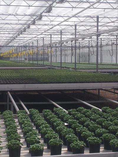 More than 18 million pots of herbs are produced in the UK each year