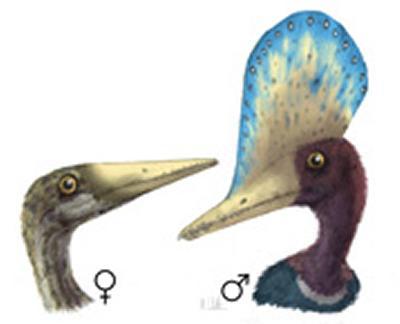 Sexual dimorphism in the pterosaur Darwinopterus