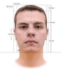 face measurements