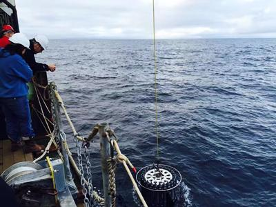 Biogeochemical cycling of iron and chromium in the oceans