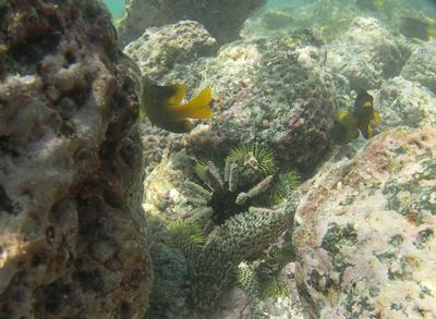 Urchins, blenny and damsel fish on the Charles Darwin Research Station
