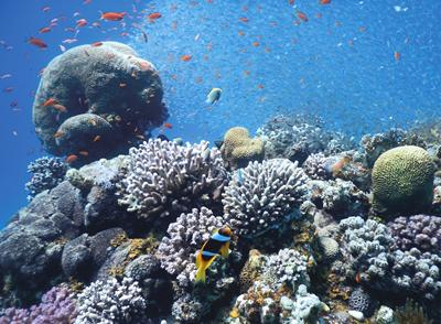 Coral reefs are hot spots of biodiversity in nutrient poor waters.