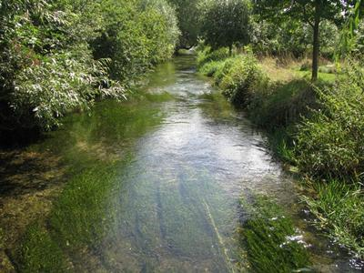 A classic chalk headwater stream providing ideal conditions for watercress farms and trout fishing