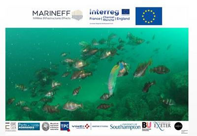 Ecological enhancement of marine infrastructures