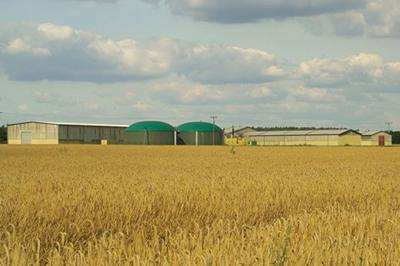 Biogas plant crop