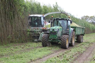 Harvesting of bioenergy coppice