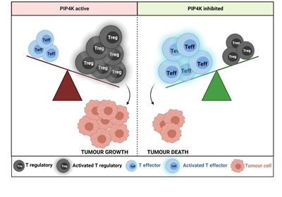 Diagram showing effect on tumour