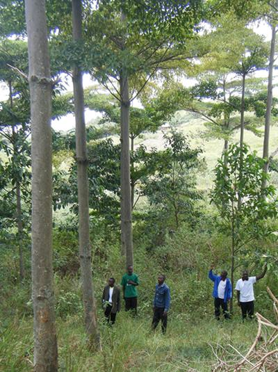 Subsidised planting of trees by carbon credits