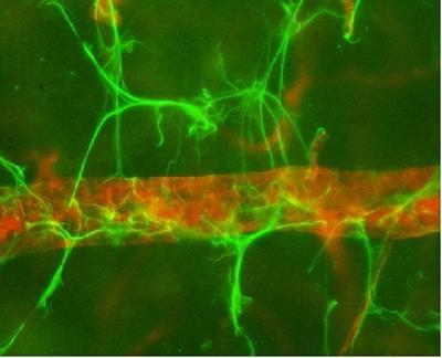 Neuro cells close up