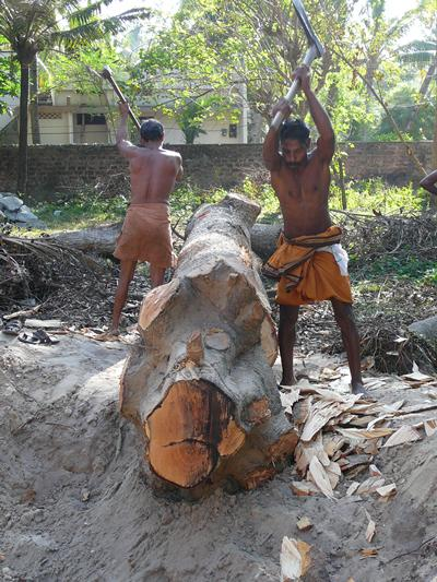 In contrast to kettuvallam, kourevallam are carved from single tree trunks.