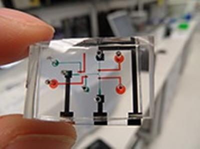 Neurochip which records the brain activity of worms