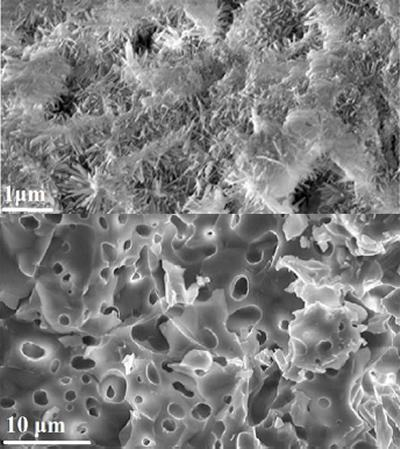 CaP, bone cement (top) and CaP bone ceramic (bottom)