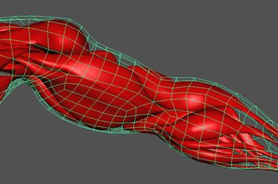 3D-rendered view of arm muscles - Dr X Yang, Bournemouth University