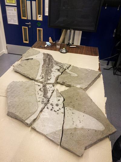 The Ichthyosaur at μ-VIS