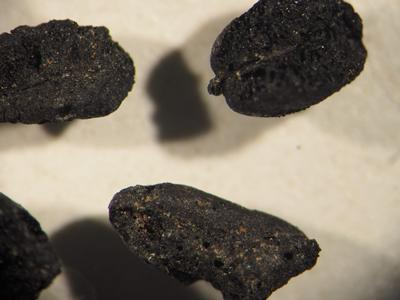 1,700 year old charred grains from Portus. Credit: L.Bonner
