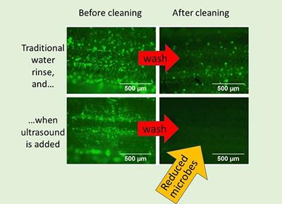 Microbes stained green on hay are removed by ultrasonic stream