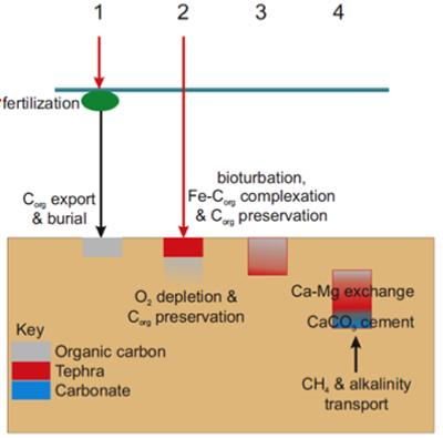 Tephra diagenesis and the carbon cycle (Source: M Palmer)