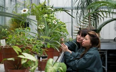 The Facility maintains a wide variety of plants to support undergraduate teaching in Plant Development & Function