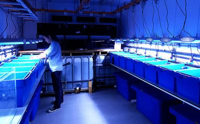 Monitoring water quality parameters as part of the INCORALS project
