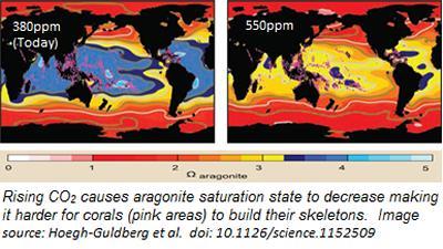 CO2 Model