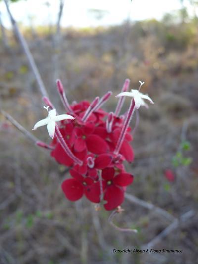 Flower, Madagascar