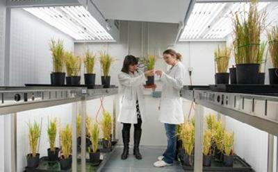 Functional analysis of heavy metal homeostasis in rice plant cells is studied