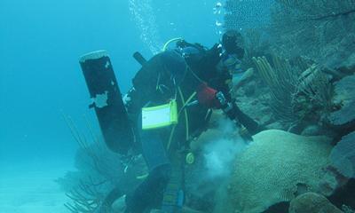 Sampling coral in Bermuda