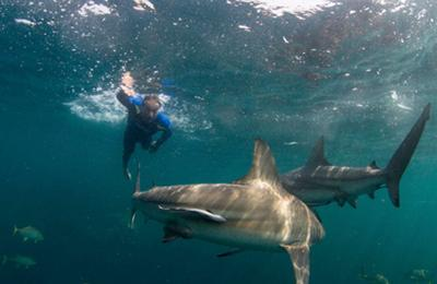 Mike Horn's Pole to Pole 360 expedition changing perceptions of sharks