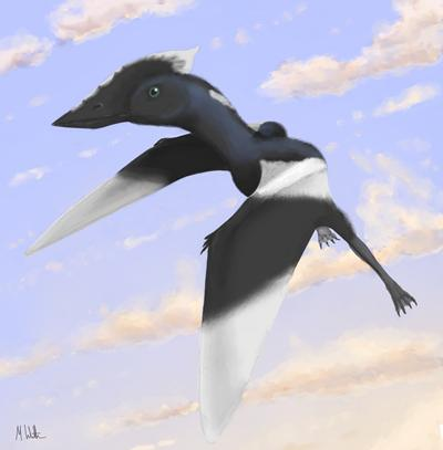 An artist's impression of a crow-sized species of prehistoric flying reptile
