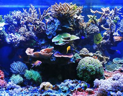 Coral Reef Tank