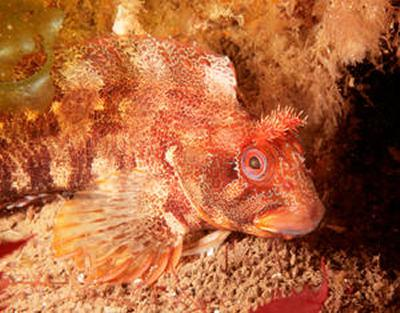 Learn more about the facinating underwater world