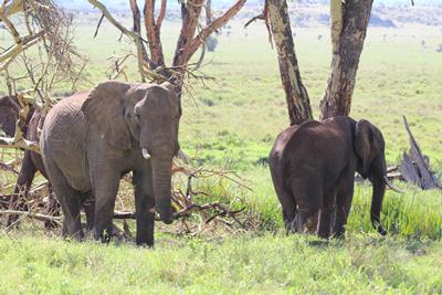 Conservation sites